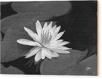 Water Lily On Pad Wood Print by Phil Mancuso