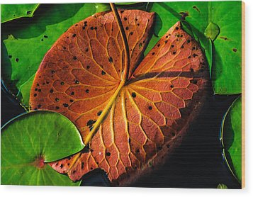 Water Lily Pad Wood Print by Louis Dallara
