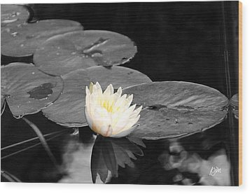Wood Print featuring the photograph Water Lily by Phil Mancuso