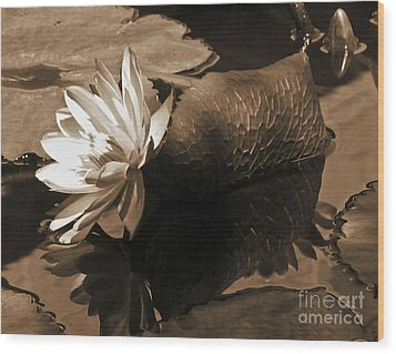 Water Lily Pond Sepia Toned Photo Wood Print by Carol F Austin