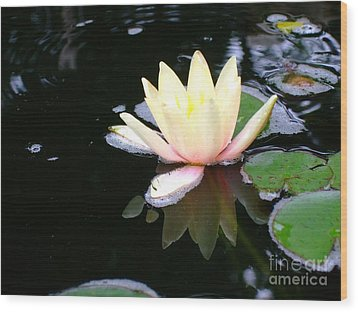 Water Lily Reflection  Wood Print by Deborah DeLaBarre