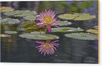Water Lily Reflection Wood Print by Kathy Ponce