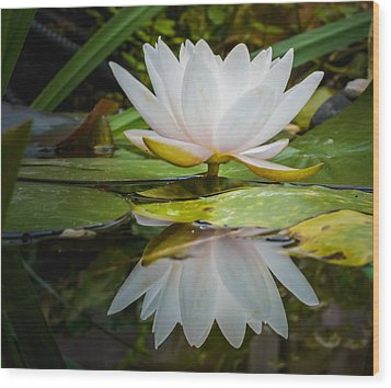 Water-lily Reflection Wood Print by Yvon van der Wijk