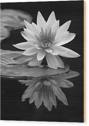 Water Lily Reflections I Wood Print by Dawn Currie