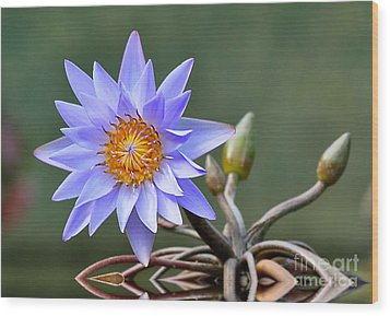 Wood Print featuring the photograph Water Lily Reflections by Kathy Baccari