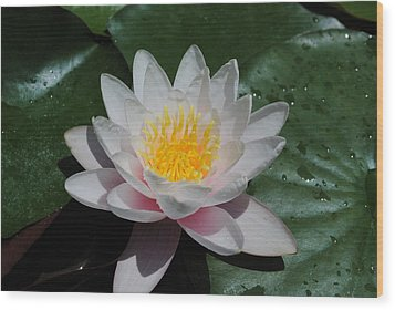 Wood Print featuring the photograph Water Lily by Robert  Moss