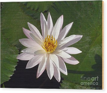 Wood Print featuring the photograph Water Lily by Sergey Lukashin
