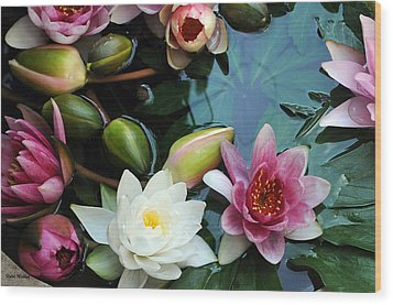 Wood Print featuring the photograph Water Lily Series 1 by Haleh Mahbod