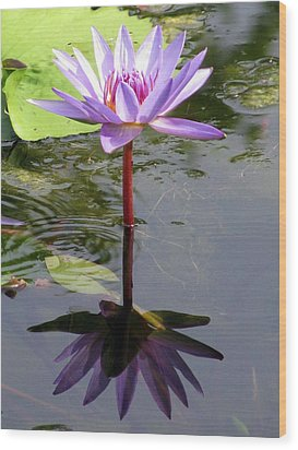Water Lily - Shaded Wood Print