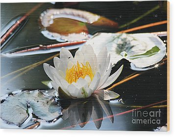 Wood Print featuring the photograph Water Lily by Trina  Ansel