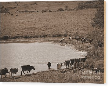 Water Parade Sepia Wood Print by Fred Lassmann