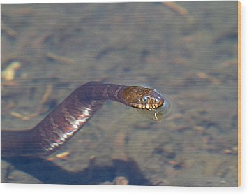 Water Snake Wood Print by Karol Livote