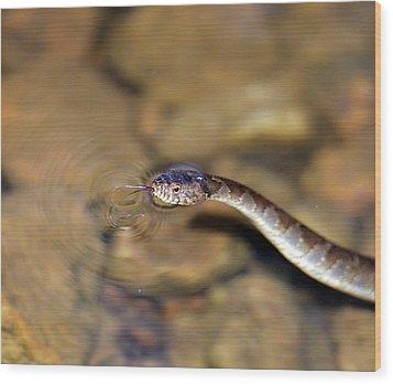 Water Snake Wood Print by Susan Leggett