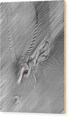 Waterbuck Wood Print