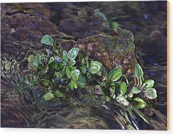 Watercress Wet And Wild Wood Print by Leda Robertson
