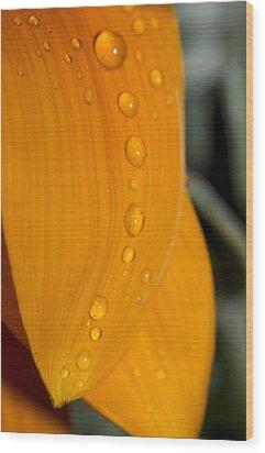 Waterdrops Wood Print by Amr Miqdadi