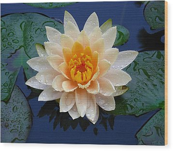 Waterlily After A Shower Wood Print by Raymond Salani III
