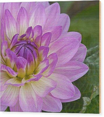 Waterlily Dahlia Wood Print