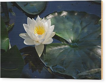 Wood Print featuring the photograph Waterlily by Janis Knight