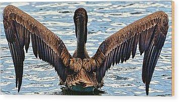 Waterproof Feathers Wood Print by Pamela Blizzard