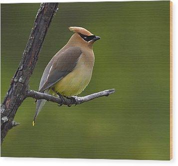 Wax On Wood Print