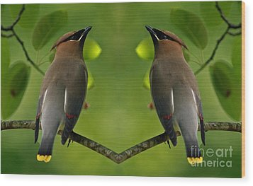 Waxwing Love Wood Print by Inspired Nature Photography Fine Art Photography
