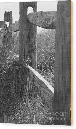 Weathered Wood Print by Barbara Bardzik