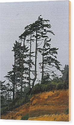 Weathered Fir Tree Above The Ocean Wood Print by Tom Janca