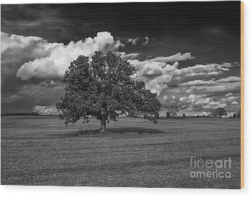 Weathered Oak Wood Print by Dan Hefle