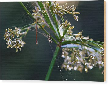 Wood Print featuring the photograph Web After The Rain by Adria Trail