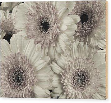 Wedding Bouquet -gerbera Duotone Wood Print