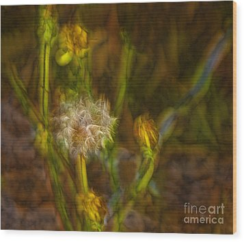 Wood Print featuring the photograph Weed Art by Shirley Mangini