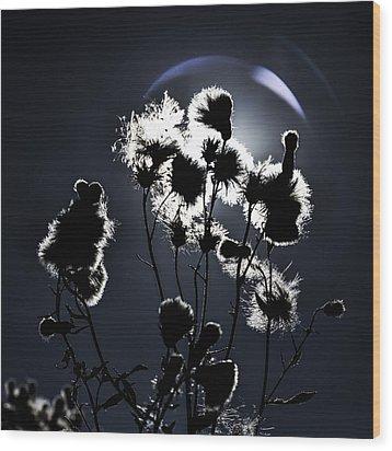 Weed Silhouette Wood Print by Mike Santis