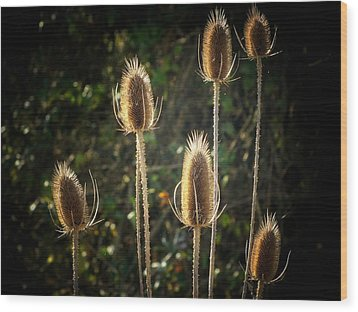 Weeds Wood Print by Michael L Kimble