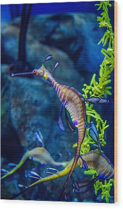 Weedy Seadragon Wood Print by Alex Grichenko