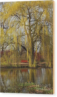 Weeping Willow  Wood Print by Isabel Poulin