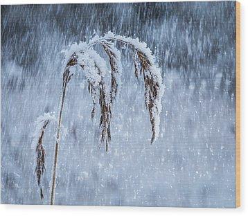 Weight Of Winter Wood Print by Janne Mankinen