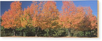 Wood Print featuring the photograph Welcome Autumn by Gordon Elwell