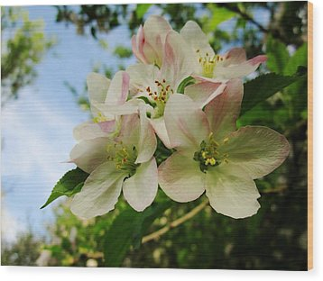 Welcome Blossoms Wood Print