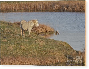 Wood Print featuring the photograph Welsh Pony  by Gary Bridger