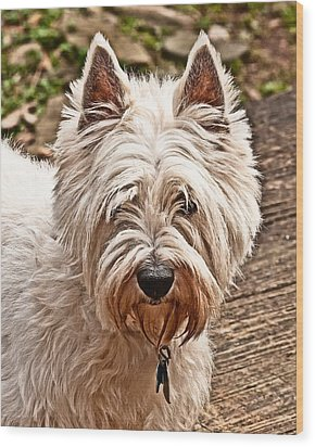 Wood Print featuring the photograph West Highland White Terrier by Robert L Jackson