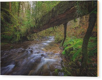 West Humbug Creek Wood Print by Everet Regal