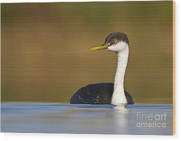 Wood Print featuring the photograph Western Grebe On The Lake by Bryan Keil