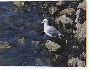 Western Gull On Rocks Wood Print