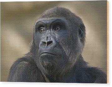 Western Lowland Gorilla Portrait Wood Print