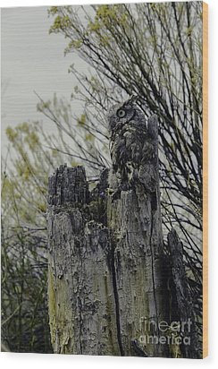 Wood Print featuring the photograph Western Screech Owl by Catherine Fenner