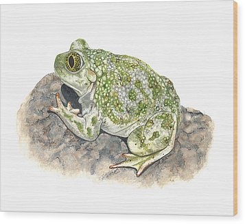 Western Spadefoot Wood Print by Cindy Hitchcock