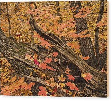 Westfork Foilage Wood Print by Tom Kelly