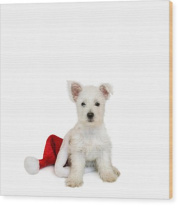 Westie Puppy And Santa Hat Wood Print by Natalie Kinnear