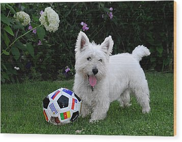 Westie World Cup Wood Print